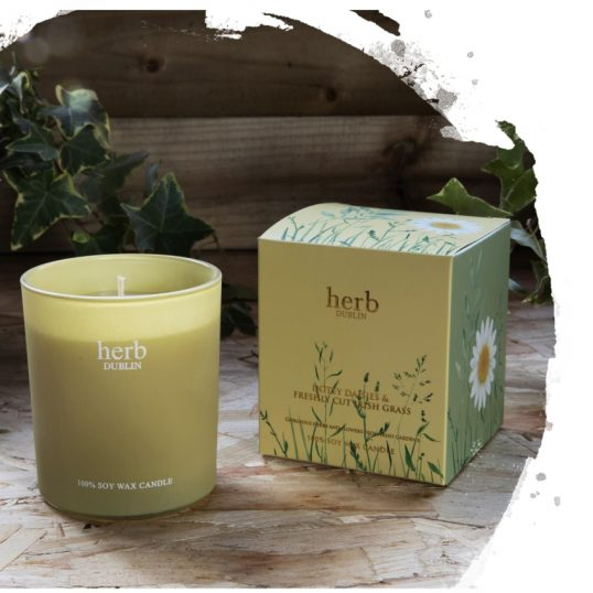 HERB DOTEY DAISIES BOXED CANDLE